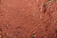 Natural red soil. With dried leaves Stock Image