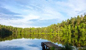 Natural bog view. Natural and relaxing bog view in Estonia during summer stock photo