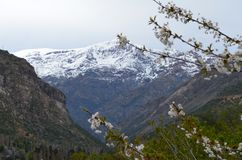 Río Blanco National Reserve, central Chile, a high biodiversity valley in Los Andes. The natural reserve of Rio Blanco is located in central Chile, in the royalty free stock photos