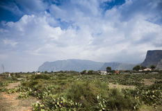 Natural Reserve of Sicily. The Natural Reserve of Sicily with mountains in the background.Prickly pear cactus grow wild at the natural reserve of Sicily, Italy Royalty Free Stock Image
