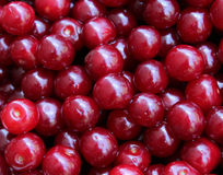 Natural ripe cherries Royalty Free Stock Images