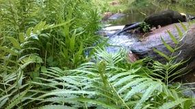 natural river hakwatunawa Stock Photos