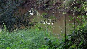 Natural river landscape with plants stock video footage