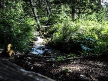 Natural river in the mountins of Montana. Royalty Free Stock Photos