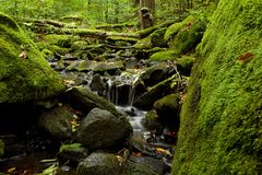 Natural river. The picture of the River in the heart of the deep forest royalty free stock photography
