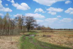 Natural road on the meadow in early spring. Stock Photo