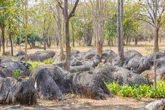 Natural rock garden, Kanchanaburi,Thailand Royalty Free Stock Image