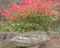 Natural Rock with Stones and Burning Bush royalty free stock photography