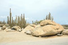 Natural rocks and cactus plants on Aruba island Royalty Free Stock Photography