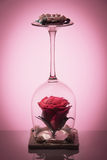 Natural rose flower in the flipped over wine glass with candle on reflective surface and gradient soft red background. Decorative item Royalty Free Stock Image
