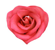 Natural rose in the form of heart. Natural fresh rose in the form of heart Royalty Free Stock Image