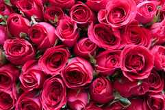 Natural roses background Royalty Free Stock Photos