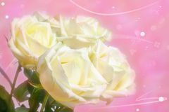 Natural roses over abstract pink background Stock Image