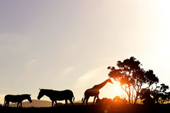 Natural Safari landscape in lights of sunset Royalty Free Stock Photo