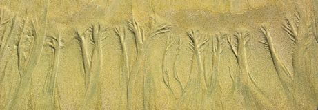 Natural sand floral pattern on flat sandy beach during low tide.