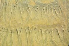 Natural sand floral pattern on flat sandy beach during low tide.  Royalty Free Stock Photography