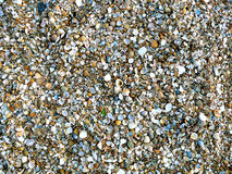 Natural sand and shells background Stock Photos