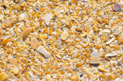 Natural sand and shells background wallpaper Stock Photography