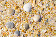 Natural sand and shells at beach background Stock Photos