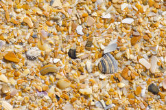 Natural sand, stones and shells background Royalty Free Stock Image