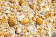 Natural sand, stones and shells beach background Royalty Free Stock Images