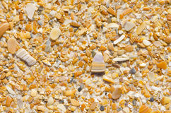 Natural sand, stones and shells wallpaper Stock Image