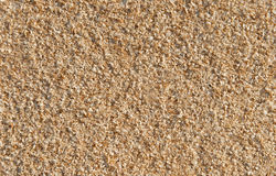 Natural sawdust textured background Stock Photo