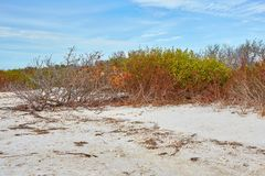 Natural Scene at Honeymoon Island State Park, Florida. Scenic view along the beach at Honeymoon Island State Park, Florida stock photos