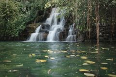 The tiny waterfall and the green water pond in the forest royalty free stock photos