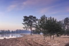 Natural scene of trees on the river bank. landscape of wildlife in early spring near river flood. royalty free stock photos