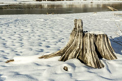 Natural scene with white snow and a tree stump Royalty Free Stock Image