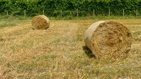 Hay bales in the field. Natural scenery of a field of barley, harvested and packaged left to drain to the sun stock photography