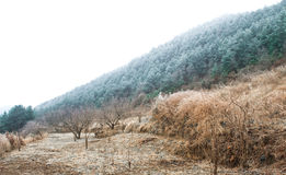 Natural scenery in winter Stock Photo
