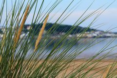 Natural sea grass Stock Photo