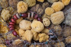 Natural Sea Sponges background Royalty Free Stock Images