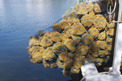 Natural Sea Sponges in a Boat Net Royalty Free Stock Photos