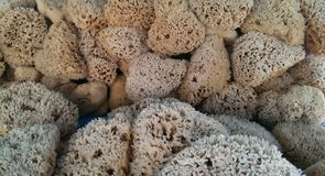 Natural sea sponges Stock Image