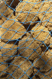 Natural Sea Sponges in a Fishing Net Stock Image