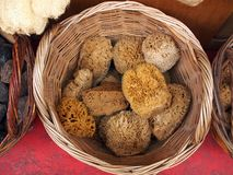 Natural Sea Sponges Stock Images