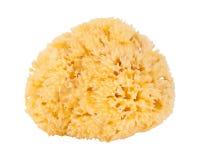 Natural sea sponges Royalty Free Stock Photos