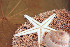 Natural Sea Star Royalty Free Stock Photos