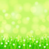 Natural seamless background Royalty Free Stock Photo