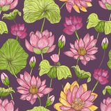 Natural seamless pattern with beautiful pink blooming lotus hand drawn on dark background. Backdrop with gorgeous Stock Illustration