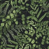 Natural seamless pattern with ferns and green herbaceous plants on black background. Gorgeous backdrop with wild forest. Herbs. Elegant botanical vector Royalty Free Stock Images