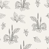 Natural seamless pattern with flowering plantains. Medicinal herbaceous plant with flowers and leaves hand drawn with Stock Photos
