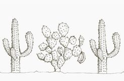 Natural seamless pattern with hand drawn cactus. Blooming Mexican desert plants. Botanical vector illustration for backdrop, wrapping paper, textile print royalty free illustration