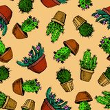 Natural seamless pattern with hand drawn green cactus. Blooming Mexican desert plants. Botanical vector illustration for backdrop, wrapping paper, textile royalty free illustration