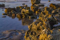 Natural seascape. Coral reefs in Sharm-El-Sheikh, Egypt stock image