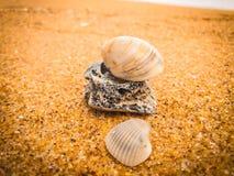 Natural seashells on the beach royalty free stock photos