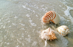 Natural Seashells on the sand beach crashing by the wave Royalty Free Stock Images